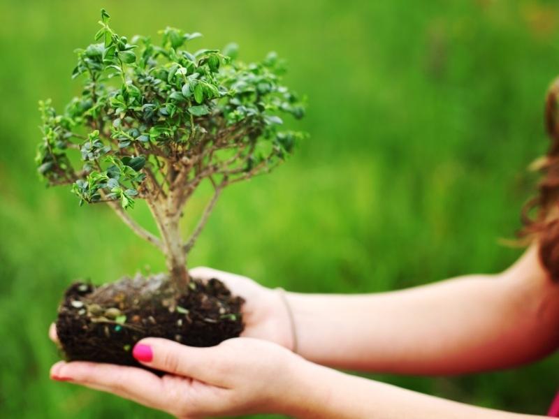 Boom Kleine Tuin : Boompjes voor in de tuin