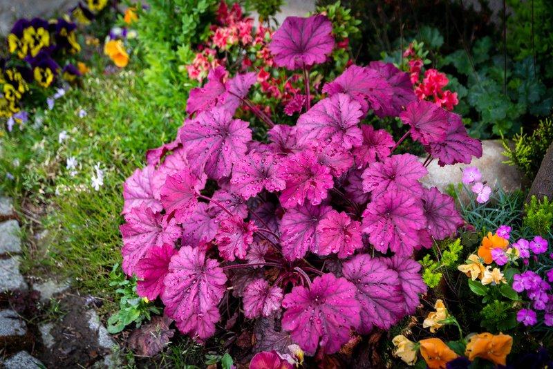 Vaste Planten Tuin : Tuinplanten assortiment huis en tuin